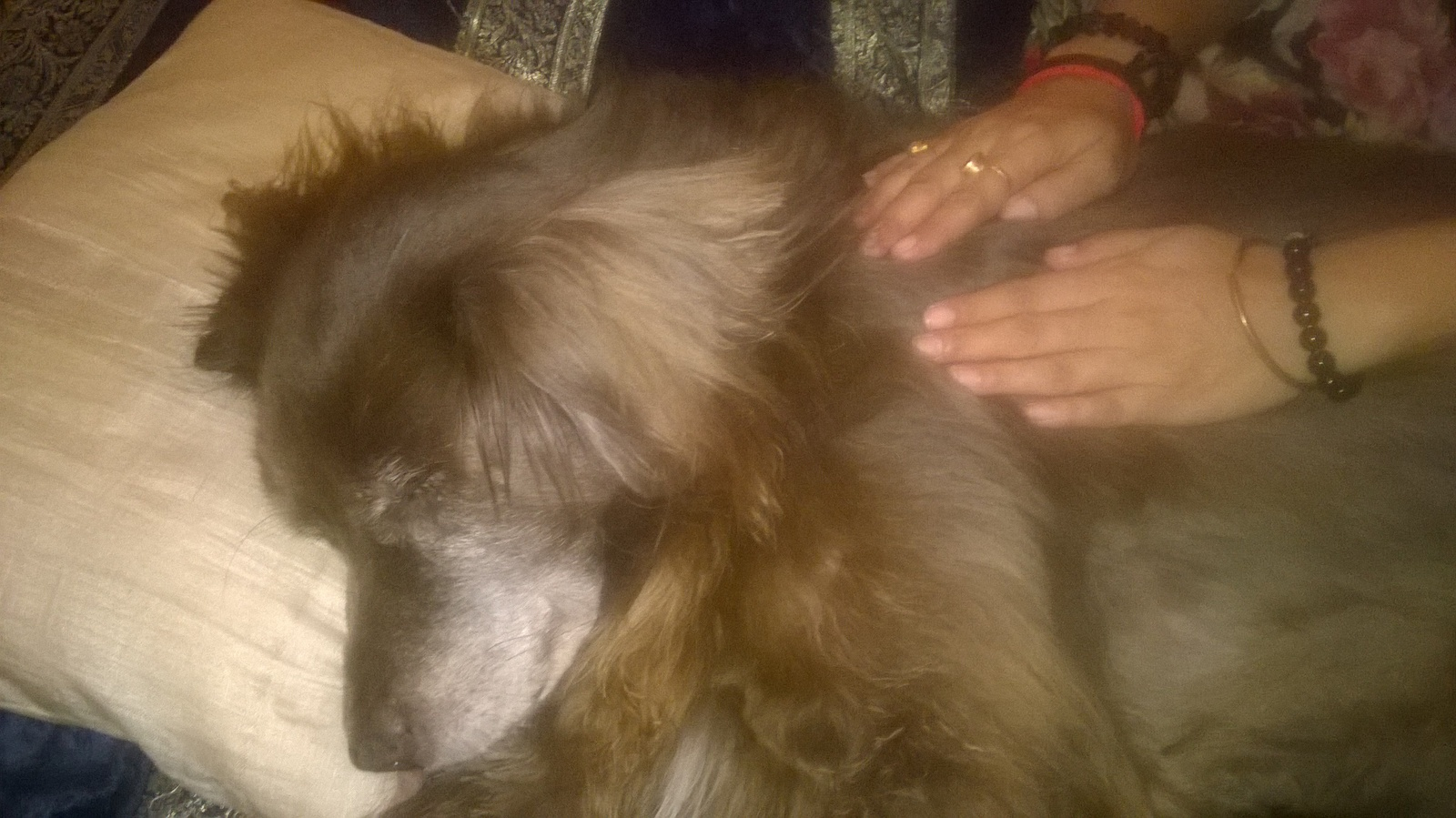 ANIMAL REIKI healing session IMG 1