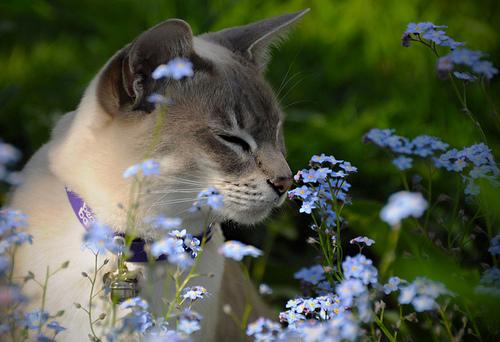 flower essences image cats